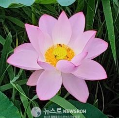 연꽃 부처님