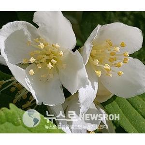 오월의 꽃