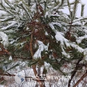습설 濕雪